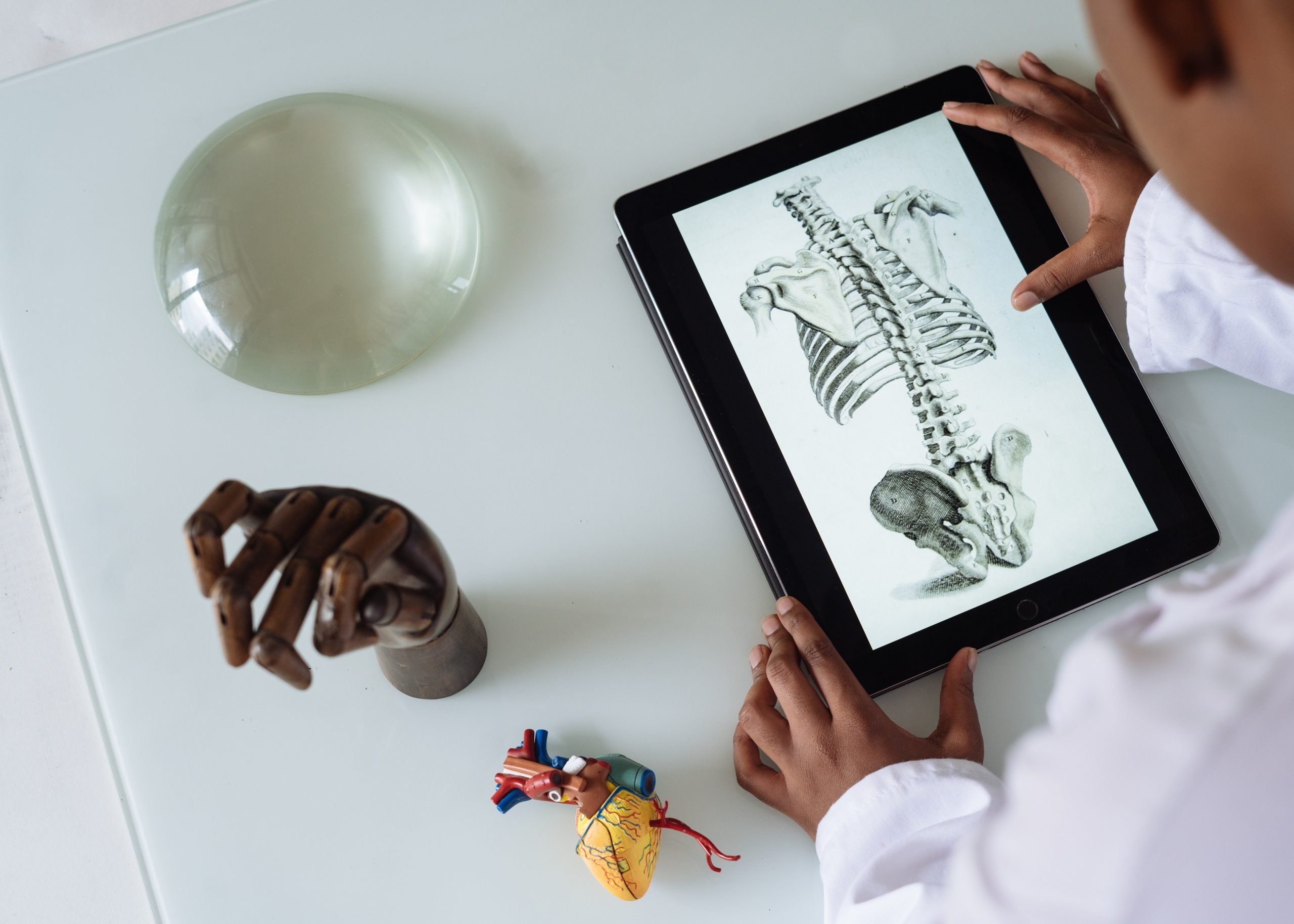 Student reviewing images of a skeleton on an iPad